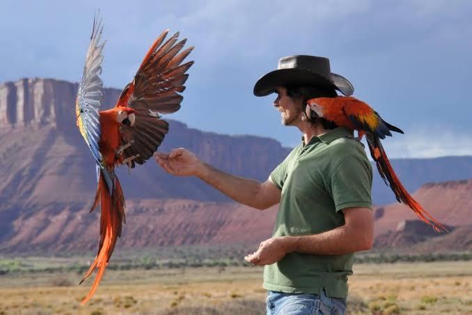 Kenapa Burung Paruh Bengkok Mudah Dilatih?