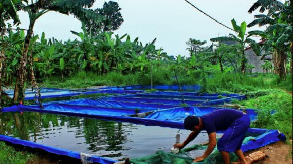 4 Jenis Ikan Air Tawar yang Paling Mudah untuk Dibudidayakan, Yuk Mampir Dimari Gan!