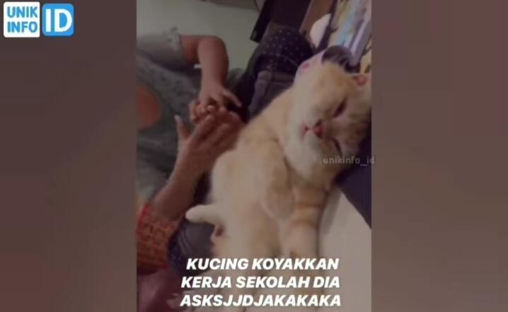 Gak Ada Akhlak, Kucing Orange Ini Robek Tugas Sekolah Majikannya Tanpa Rasa Bersalah!