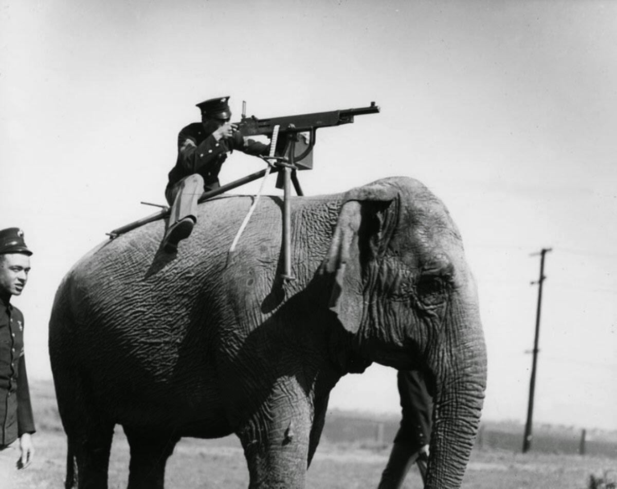 Misteri 'Foto KUNO' Seorang Tentara Dengan Senapan Mesin Di Atas Gajah !