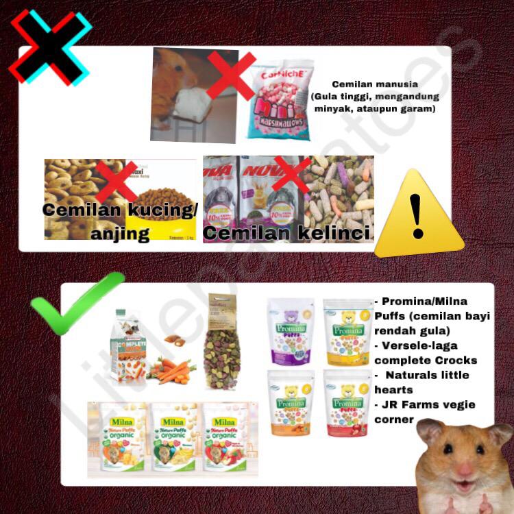 Mainan, Makanan, Cemilan dan Bedding Yang Berbahaya Untuk Hamster