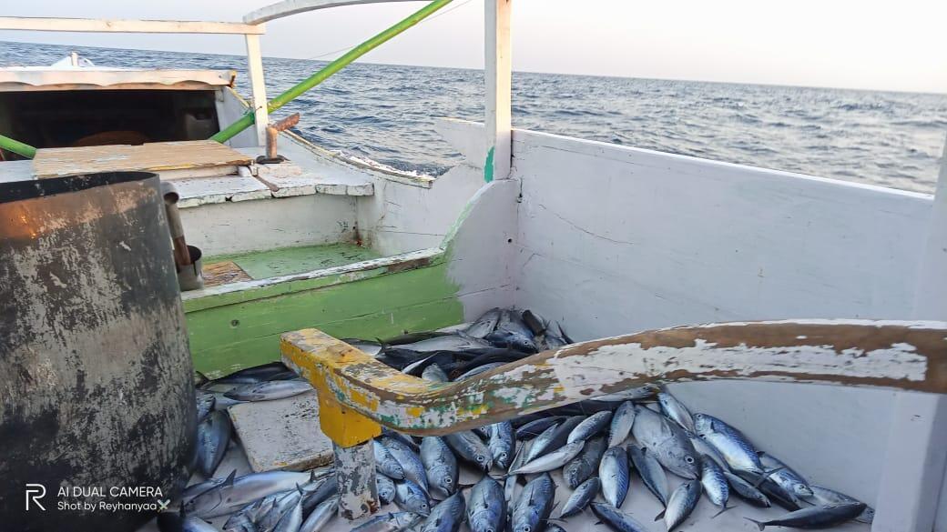 Before After Pandemi Sebagai Nelayan Terhadap Hasil Laut, Dampak dan Cara Mengatasi
