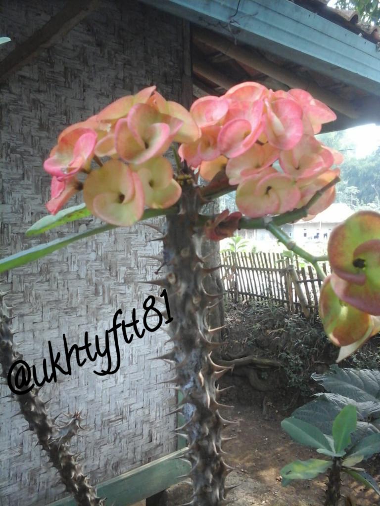 Tips dan Trick Menanam Bunga Ala Ane!
