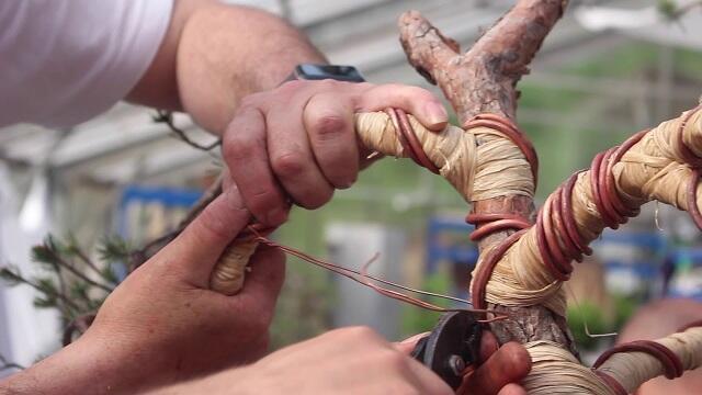 Jarang Diketahui, Ini 6 Alat Rahasia Yang Dipakai Seniman Bonsai Di Belakang Layar
