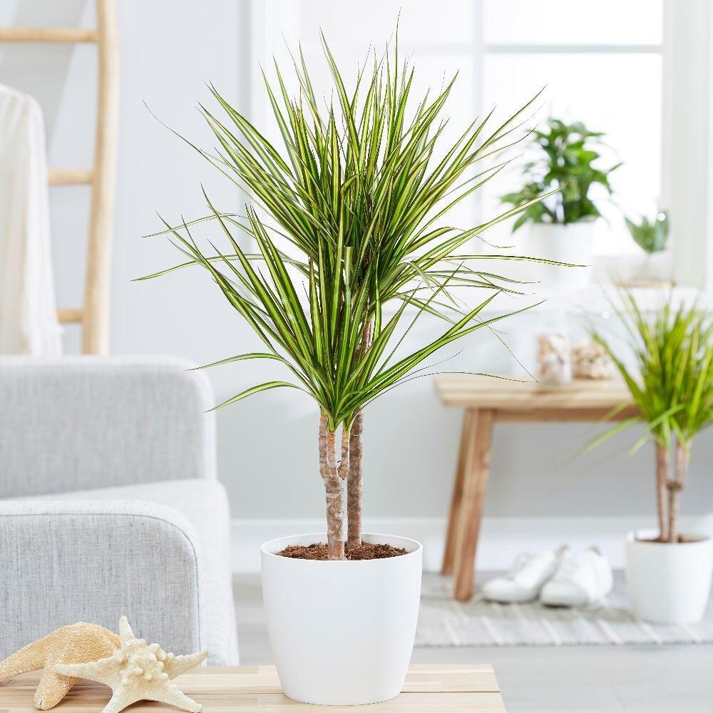 Fresh dan Elegan, Berikut 7 Rekomendasi Tanaman Hias Indoor