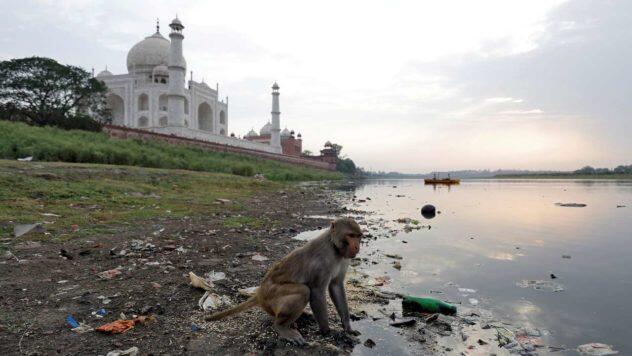 5 Pembunuhan Sadis Dilakukan Oleh Monyet !