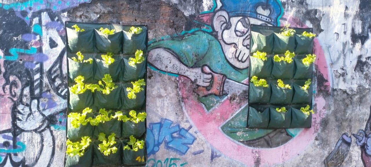 Menanam Selada Di Dinding Sekaligus Sayur Dan Tanaman Hias!
