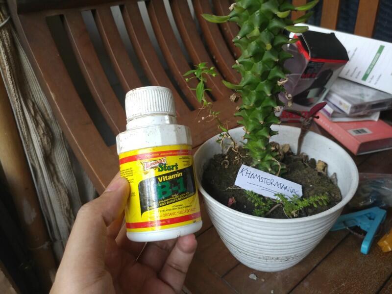 Tips Merawat Tanaman Unik Dan Antimainstream Monadenium Di Pot Mini