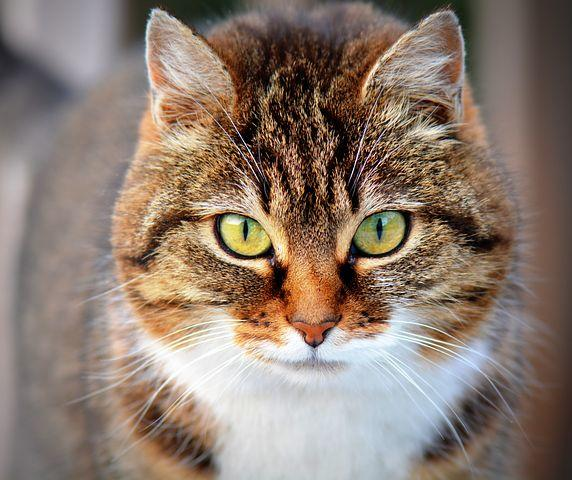 Jangan Meremehkan Fobia Kucing