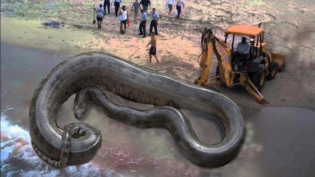 8 Daftar Hewan Terkuat Menurut Ukuran Tubuhnya, Nomor 1 Sering Tampil di Larva Island