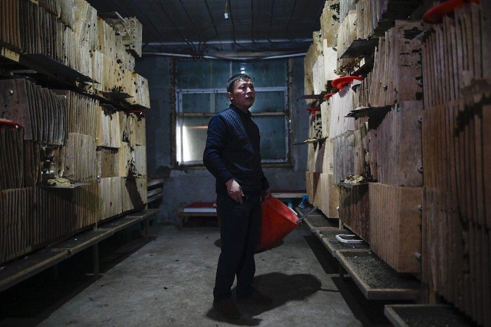 Peternakan Kecoa di China Ini Dibuat Untuk Konsumsi Manusia