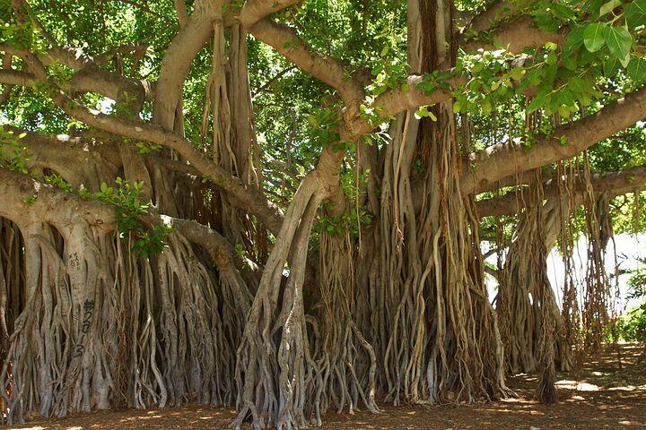 Rumahku Berhantu Karena Keberadaan Jembatan dan Pohon Beringin di Dekatnya, Syerem!