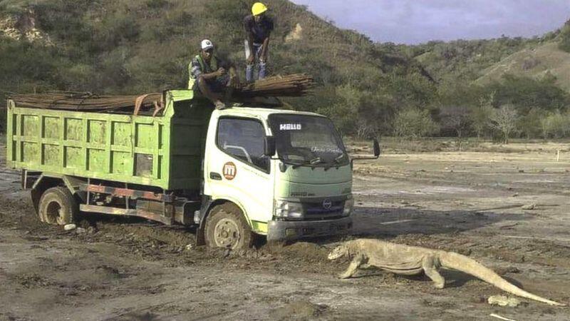 Foto viral memicu kekhawatiran tentang 'Jurassic Park' di ...