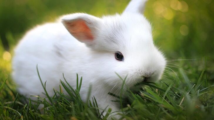 Kelinci Percobaan, Tapi Kenapa Percobaannya Menggunakan Tikus Bahkan Manusia?