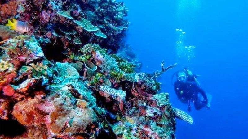 [Coc Reg. Gorontalo] Taman Laut Olele! Surga Bawah Laut Yang Indah Di Gorontalo!