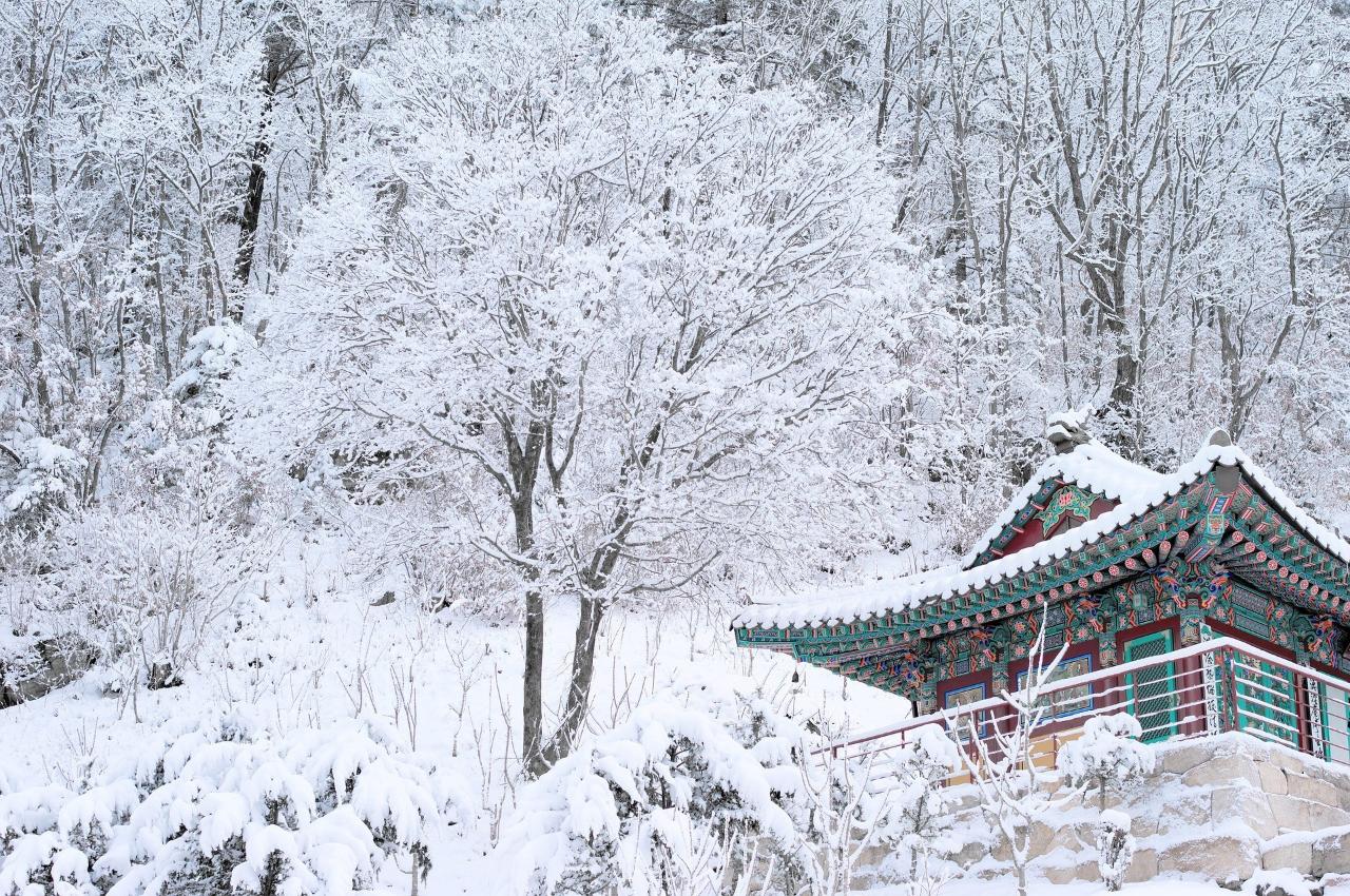 Daebak! Beginilah Meriahnya Musim Dingin di Korea Selatan