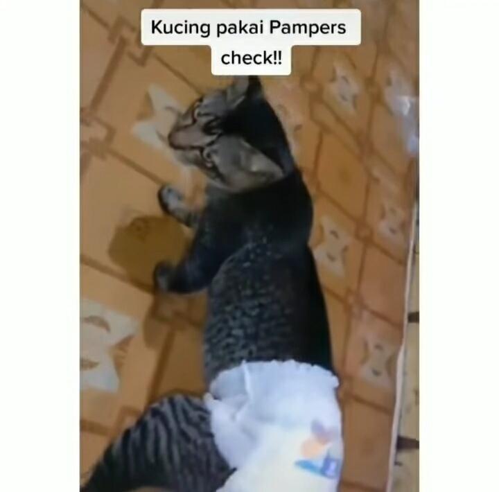 Alami Diare, Kucing ini Dipakaikan Pampers Hingga Berjalan Seperti Anak Baru Disunat!