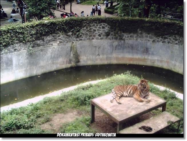 Tempat Wisata Terdekat Dari Rumah Ane Ya Kebun Binatang Bandung