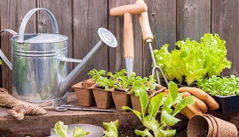 Tips Cerdas Membangun Taman Di Rumah Saja, Perhatikan Ini Dulu!