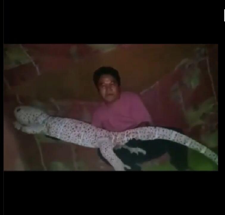 Viral Video Pamer Tokek Jumbo Ukuran 2 Meter yang Pemiliknya Auto Jadi Sultan!