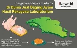 Daging Ayam Buatan Lab, Pertama Kali Akan Di Jual Di Singapura