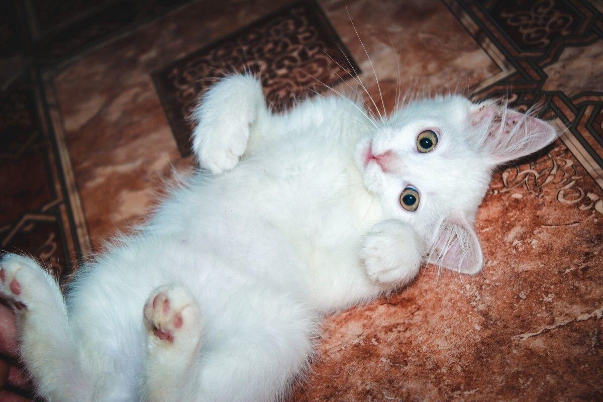 Tanda Kucing Sayang Sama Agan. Catlovers Wajib Tau! (based on reality)