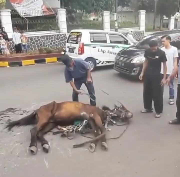 Sedih Dan Meneteskan Air Mata, Diduga Terlalu Lelah, Kuda Ini Tergeletak Di Jalanan