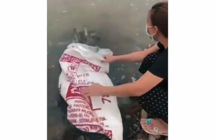 Viral Satu Keluarga Lepaskan Dua Karung Besar Berisi Ikan Lele Ke Sungai! Biar Apa?