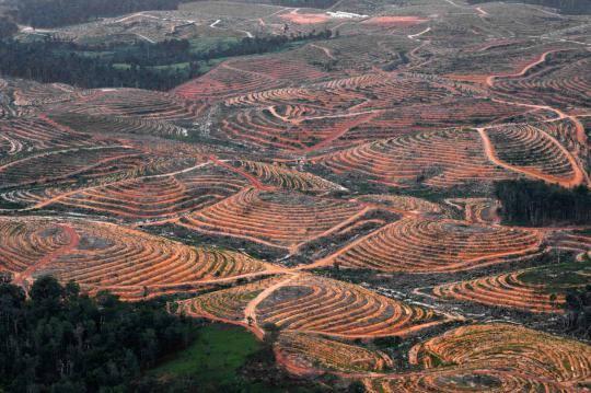 Salah Jokowi? Saat Rejim SBY Hutan Digunduli, Luas Hutan Kalimantan 62,8% Terpangkas!