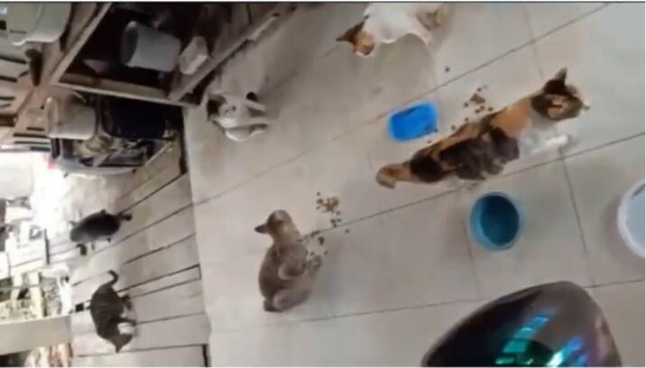 Tuai Pujian, Para Relawan Ini Selamatkan Puluhan Kucing yang Terjebak Banjir Kalsel!