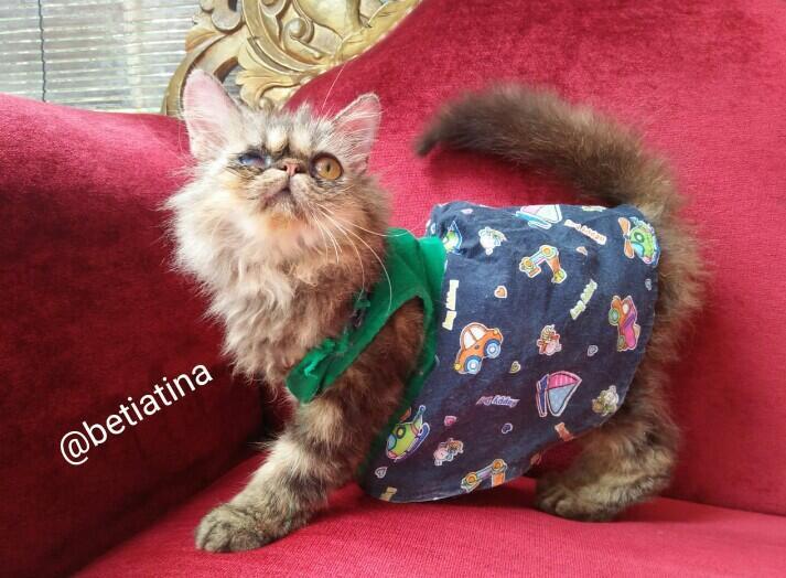 Merawat Boy Kucing Kesayangan Dengan Sepenuh Hati