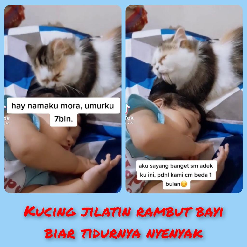 Lucu Dan Menggemaskan Melihat Kucing Ini Menjaga Bayi Yang Sedang Tertidur