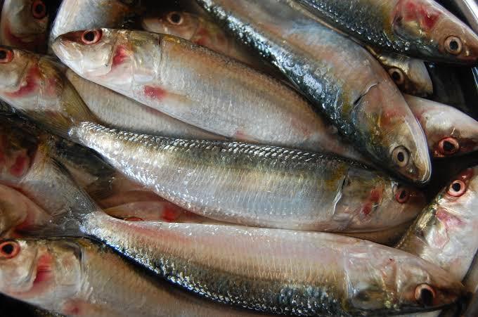 Nama-nama Ikan Ala Ibu-ibu Sosialita Fancy Jaksel
