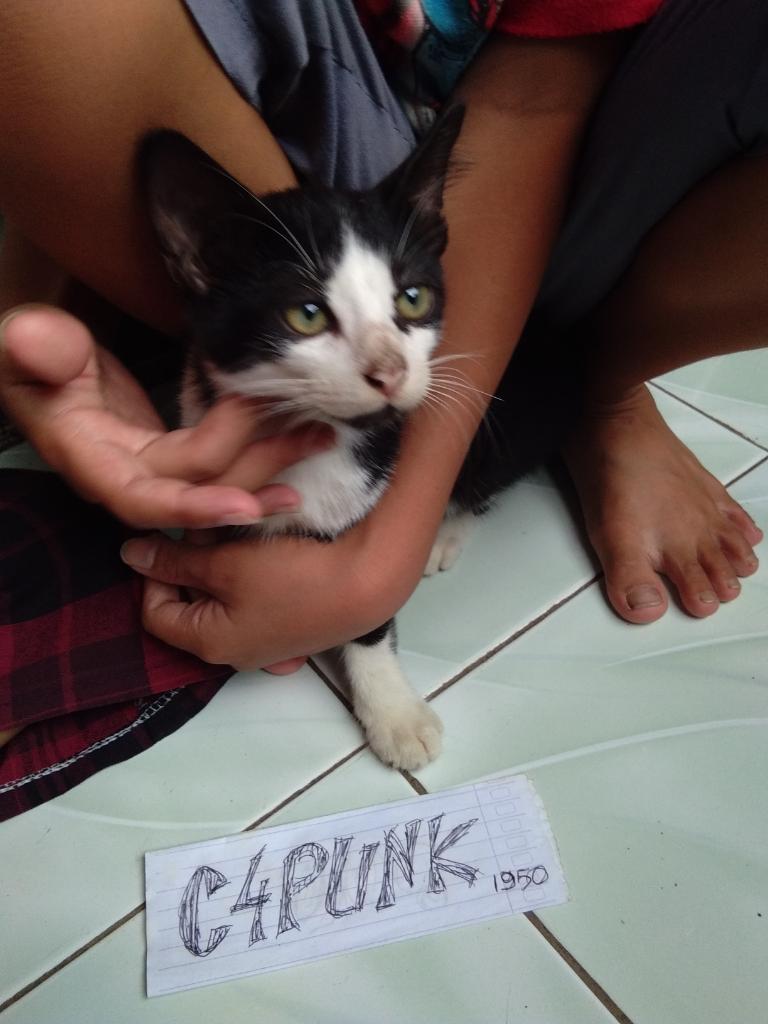 Si Komo Kucing Mungil Dirumah, Membuat Bahagia