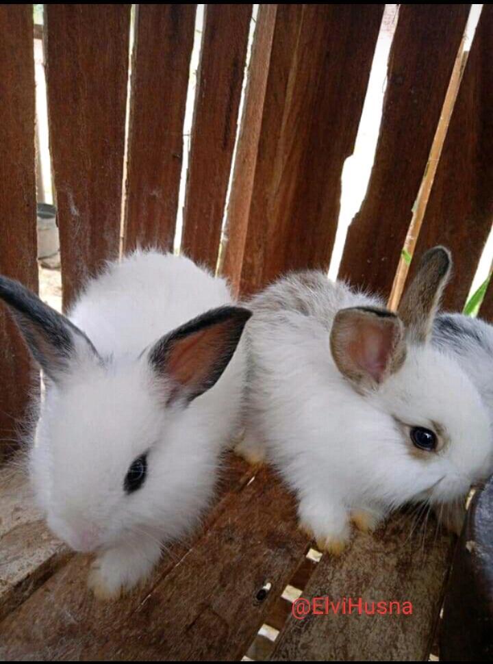 Miki dan Miko! Imut dan Menggemaskan, Cocok Banget Jadi Teman Pas Galau