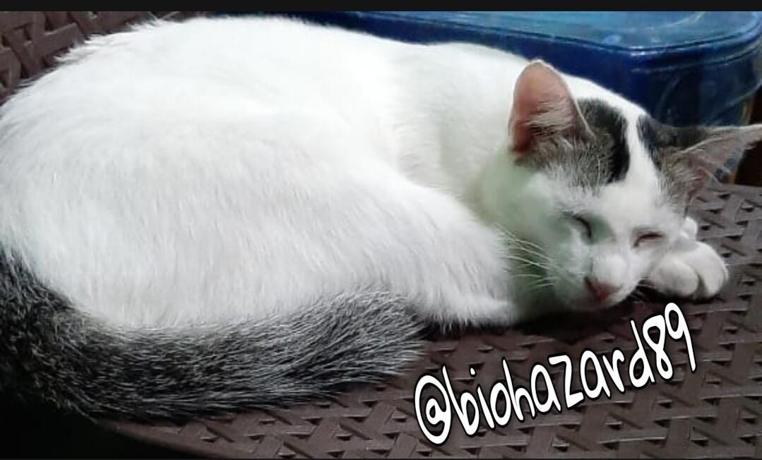 [COC Mamalia] 9 Tips Membuat Kucing Menyukai Kita! Sudah Teruji Secara Ilmiah!