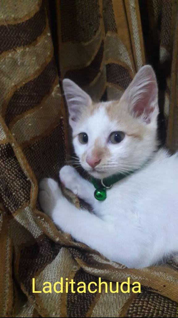 [COC] Tips Cegah Kucing Kesayangan Tertular Virus Mematikan