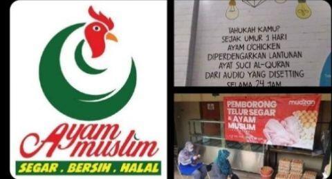 Viral Ayam Muslim, Sejak Menetas Didengarkan Lantunan Al Quran, Apa Rasanya