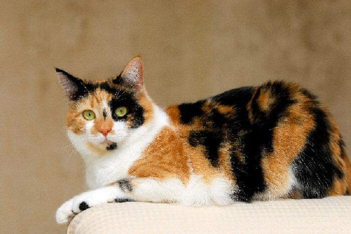 Bobo si Kucing Piaraan Ane yang Suka Bobok dan Mitos-mitos Seputar Kucing