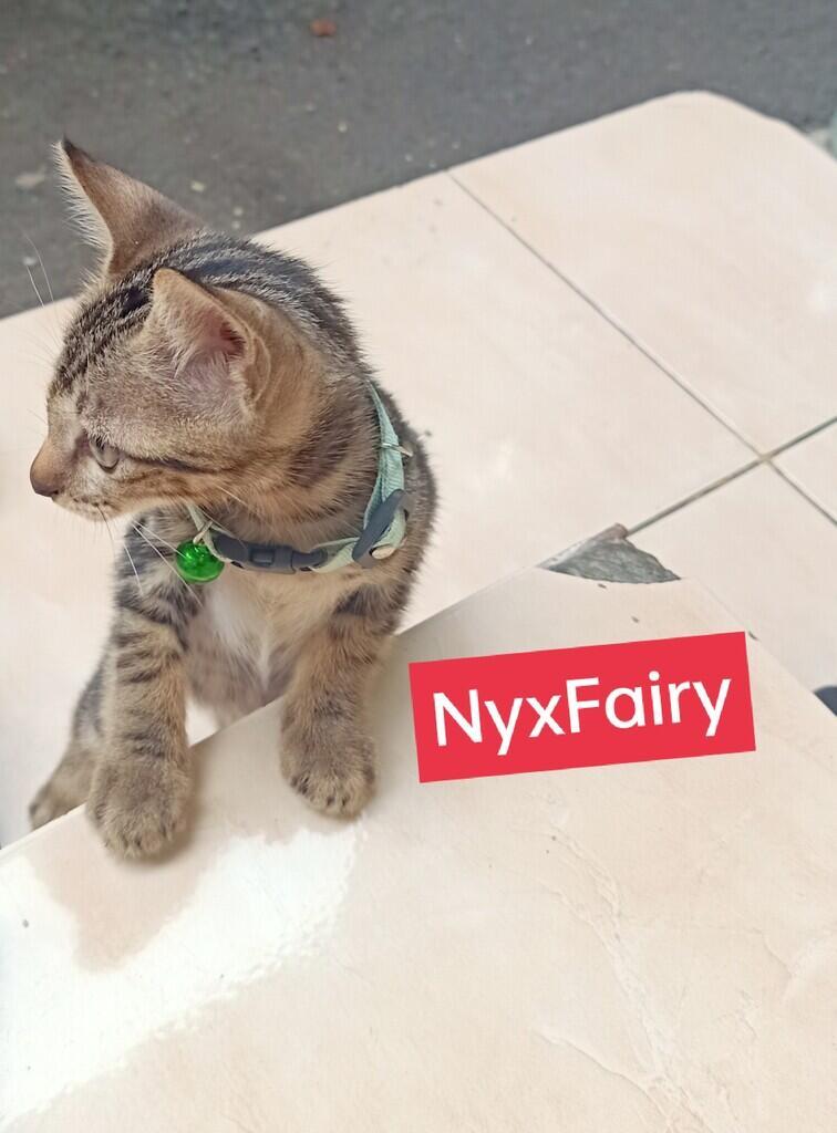 Hal-Hal yang Perlu Diketahui tentang Kucing! New Owner Masuk!