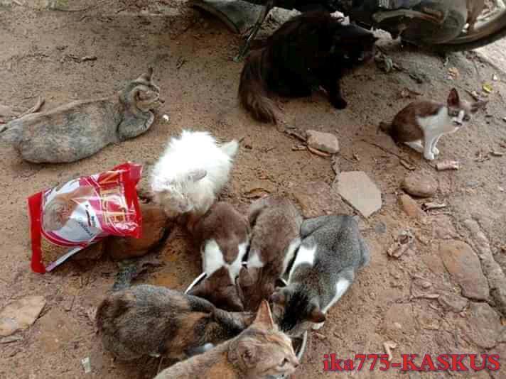 Memelihara Kucing, Menjadi Salah Satu Kegiatan Kami Saat Pandemi