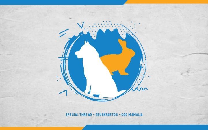 Memelihara Anjing Siberian Husky dan Kelinci yang Menggemaskan