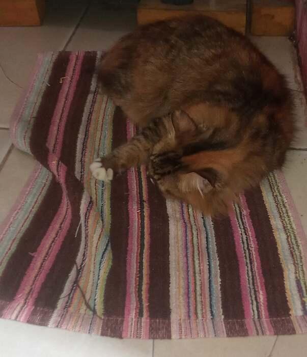 Kelakuan Kucing di Rumah. Demen Banget Santuy di.... Keset!