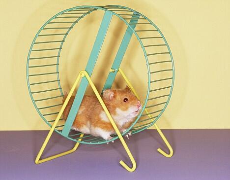 5 Rekomendasi Mainan Buat Peliharaan si Hamster