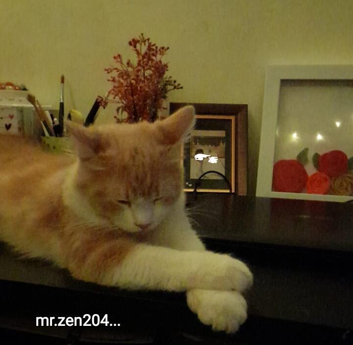 Kucing Juga Bisa Stres, Yuk Kenali Cara Mengatasinya