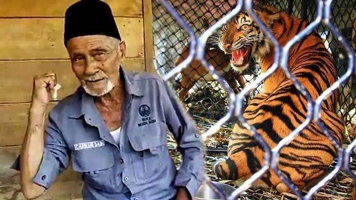 Inilah Sarwani Sabi, Sang Penakluk Raja Rimba Harimau Sumatera