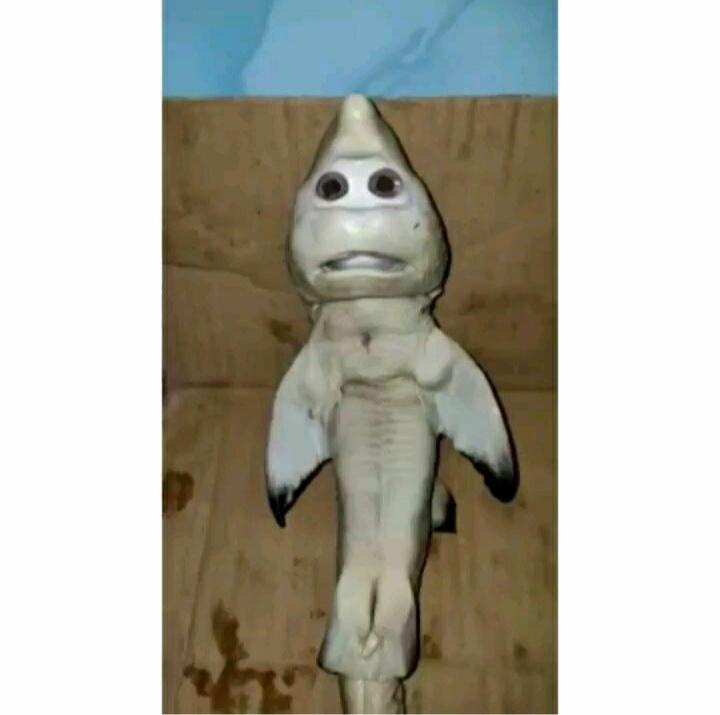 Viral, Nelayan NTT Temukan Hiu Tak Biasa, Disebut Mirip Wajah Manusia