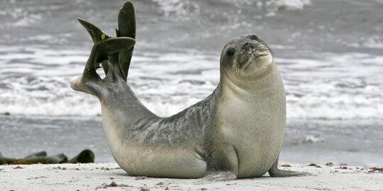 Hewan-hewan ini sering dikira sama, padahal ada perbedaanya lho!