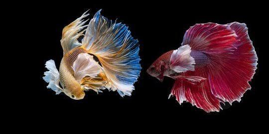 Kecantikan Hewan-Hewan Ini Sungguh Menakjubkan Loh
