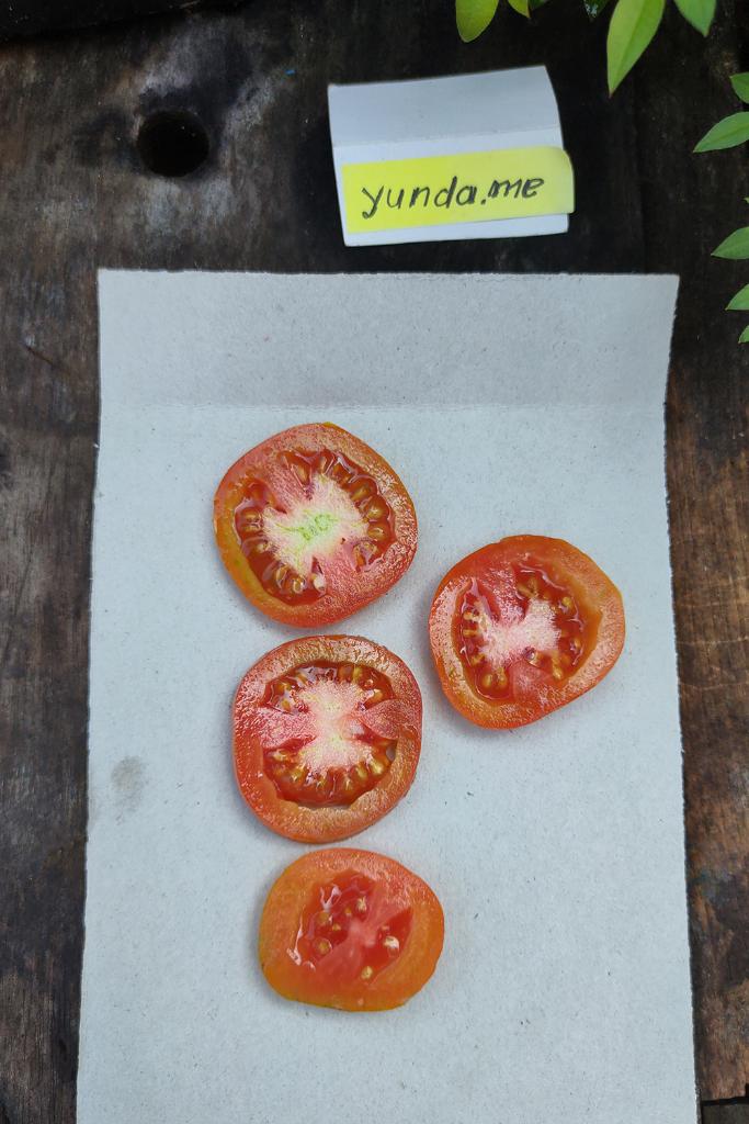 Tips Penyemaian Bibit Cabai Dan Tomat Untuk Konsumsi Pribadi